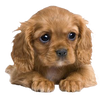 The Dog Shop_ Low Prices, Free Shipping