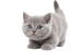 The Cat Shop_ Low Prices, Free Shipping