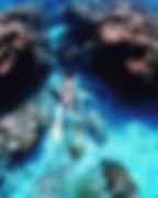 沖縄スキンダイビング