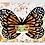 Thumbnail: Carolina white butterfly