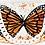 Thumbnail: Sabrina white butterfly