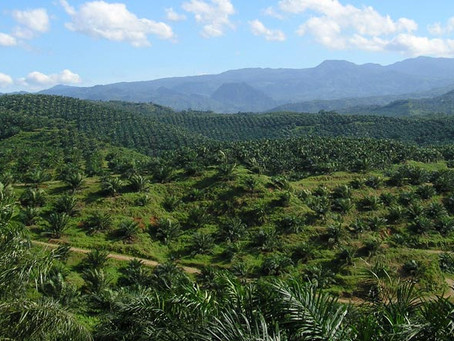 S'pore shoppers to choose products using ethical palm oil
