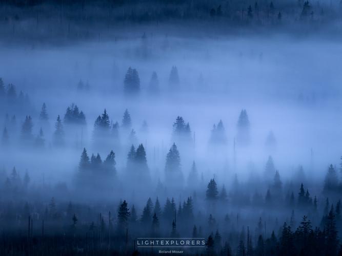 Byerischer Wald