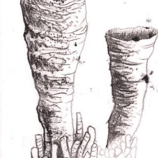 Tubular Coral Monoprint