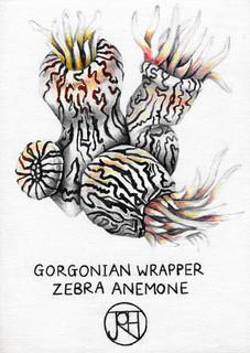 Gorgonian Wrapper: Zebra Anemone