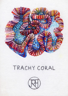 Trachy Coral