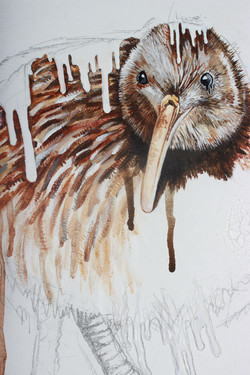 Brown Kiwi (IUCN: Vulnerable) DETAIL