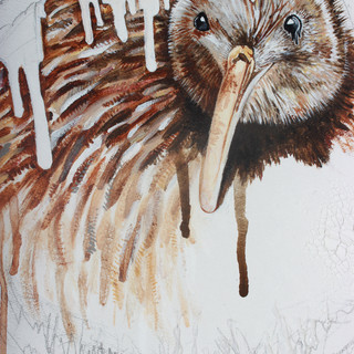 DETAIL. Brown Kiwi (ICUN: Vulnerable)