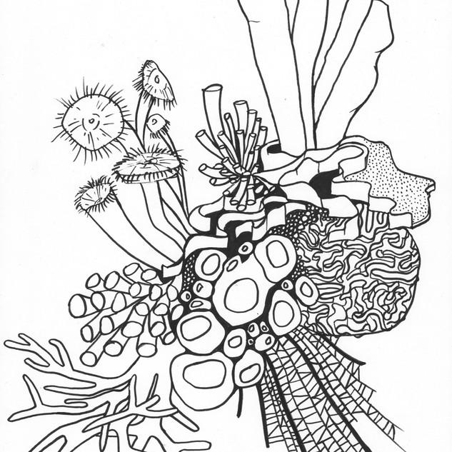 Line Drawing II