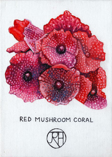 Red Mushroom Coral