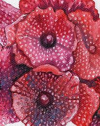 Red Mushroom Coral 2.jpg