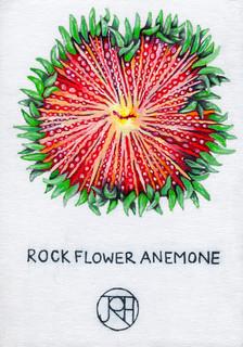 Rock Flower Coral