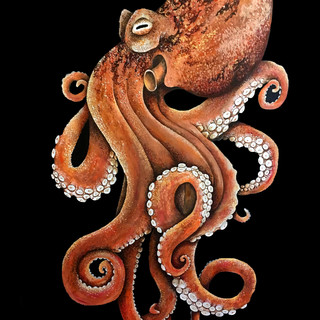 Great Pacific Octopus (ICUN: Unknown)