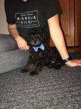 Wilson as a puppy