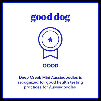 deep creek good dog.jpg