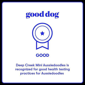 deep creek good dog.jpg