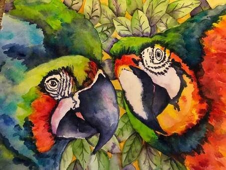 Deborah Bernard watercolor macaws.JPG