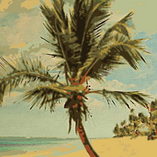 Vintage Palm Tree from Postcard less pos