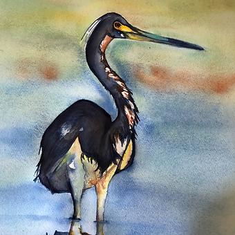 Deborah Bernard watercolor water bird square.png