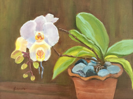 Potting Shed Orchid