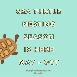 Sea Turtle Nesting post.png