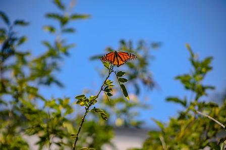 Butterfly in garden A2K.png