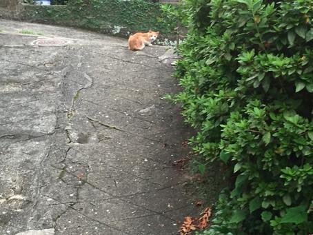 島猫ちゃんたち