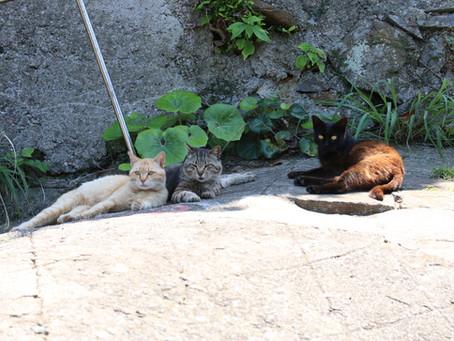 平島の猫たち