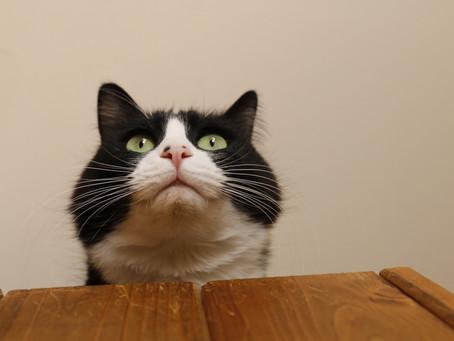 国芳の「流行猫の曲手まり」模写