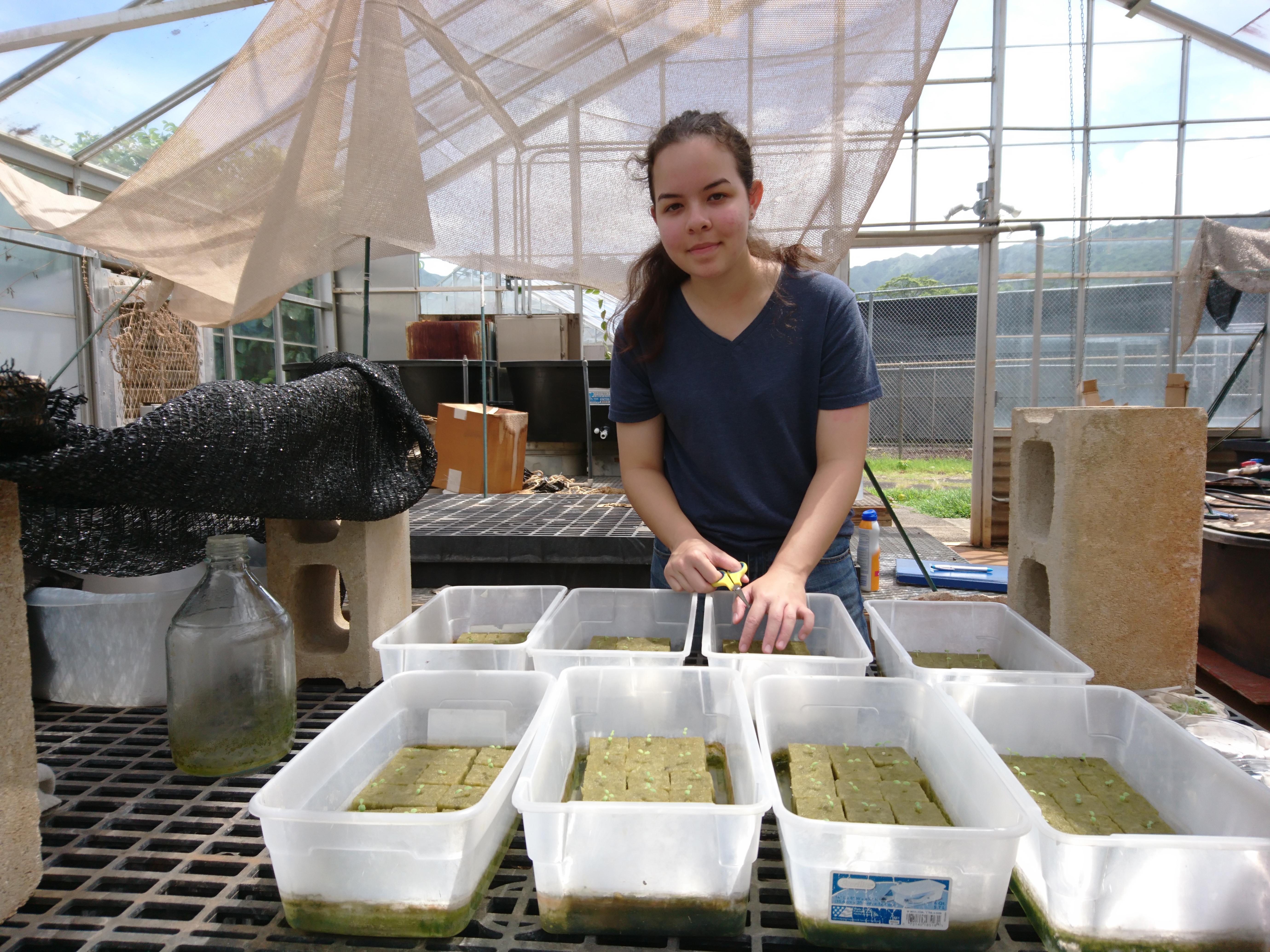 High school students work on aquaponics system UH manoa