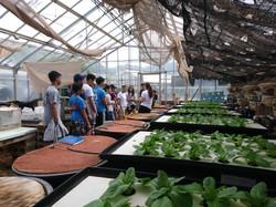 High school students visit aquaponics system UH manoa