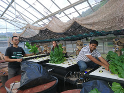 Harvest aquaponics products