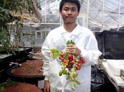Tomato from aquaponics