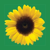 The Sunflower Conversations podcast