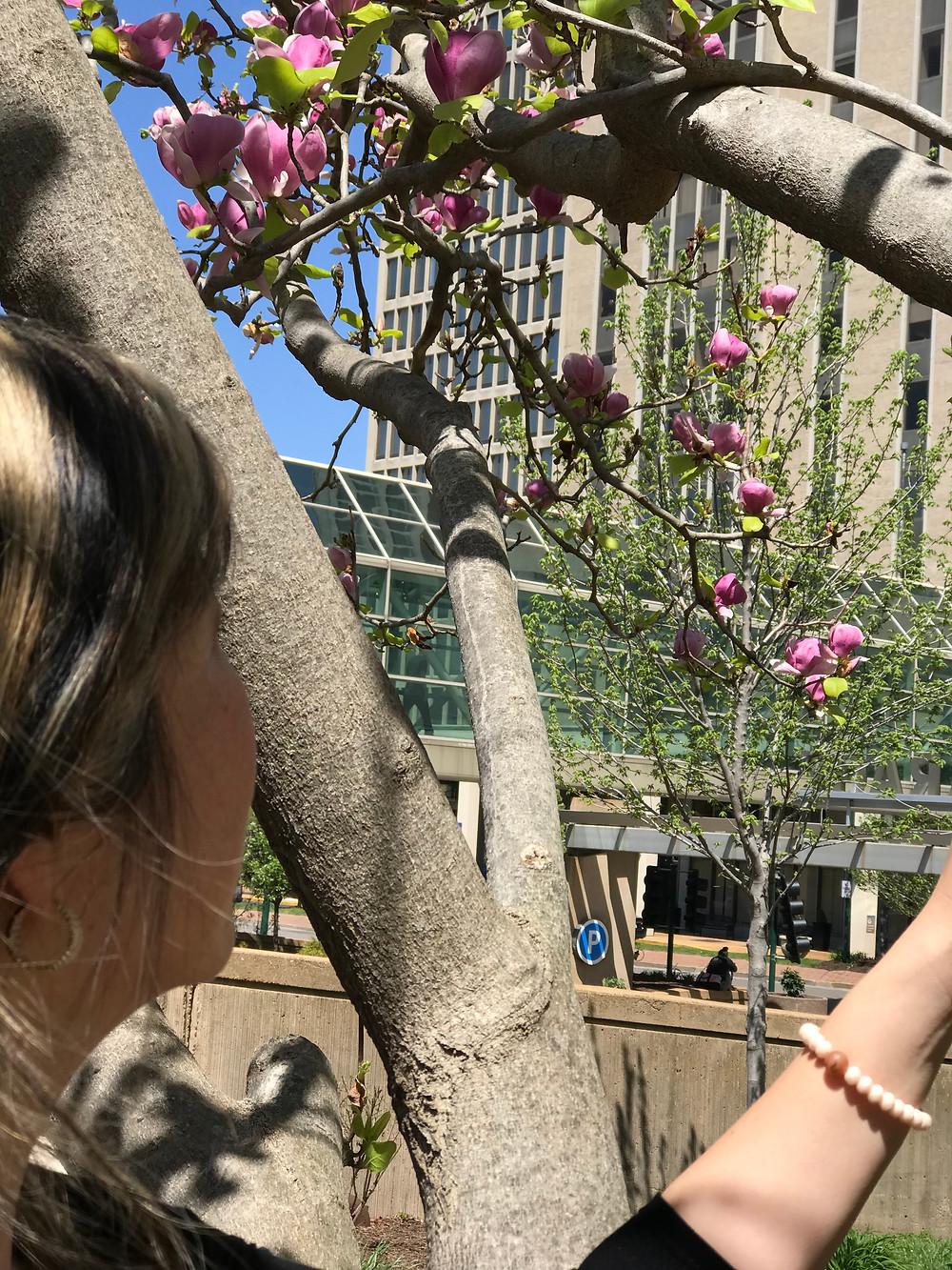 magnolia tree, hospital