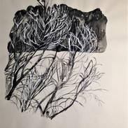 ramas brotando /De la serie regeneración