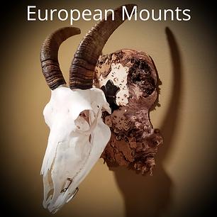 EuropeanMounts.png