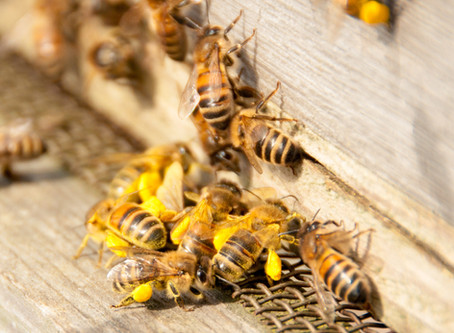Prison, Honeybees, and a Sense of Significance