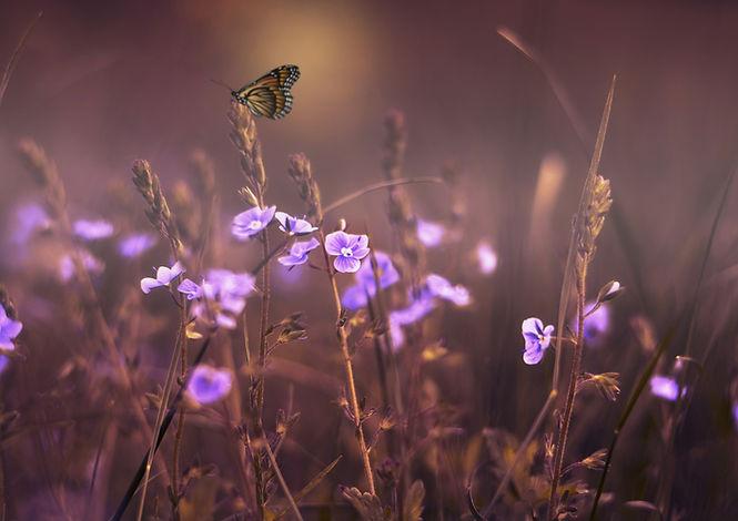 flowers-402094_1920.jpg