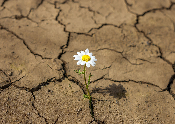 CONSULTORIO-resiliencia.jpg