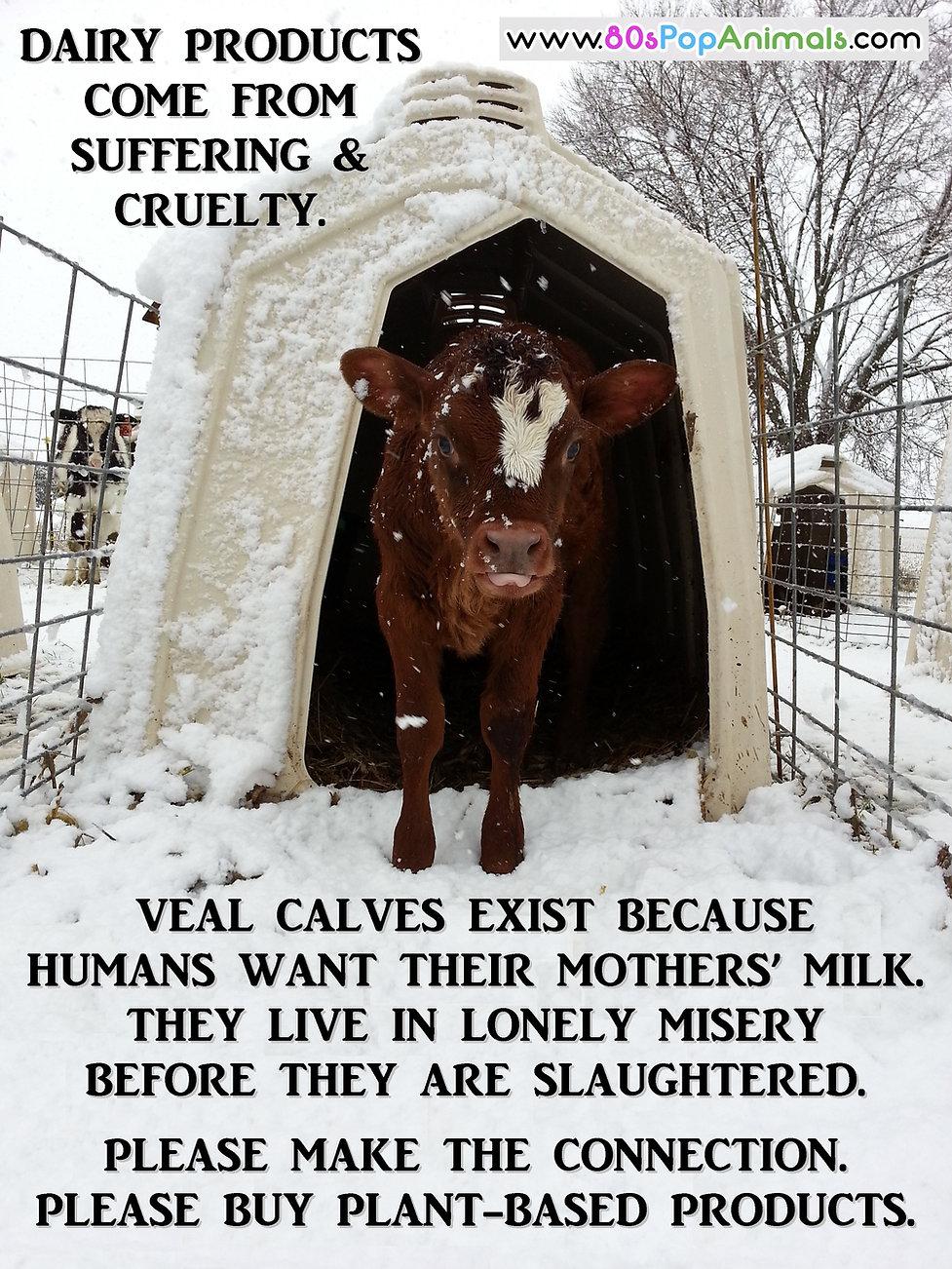 Dairy Cruelty Suffering