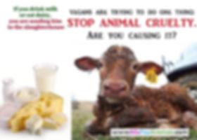 Milk causes animal cruelty