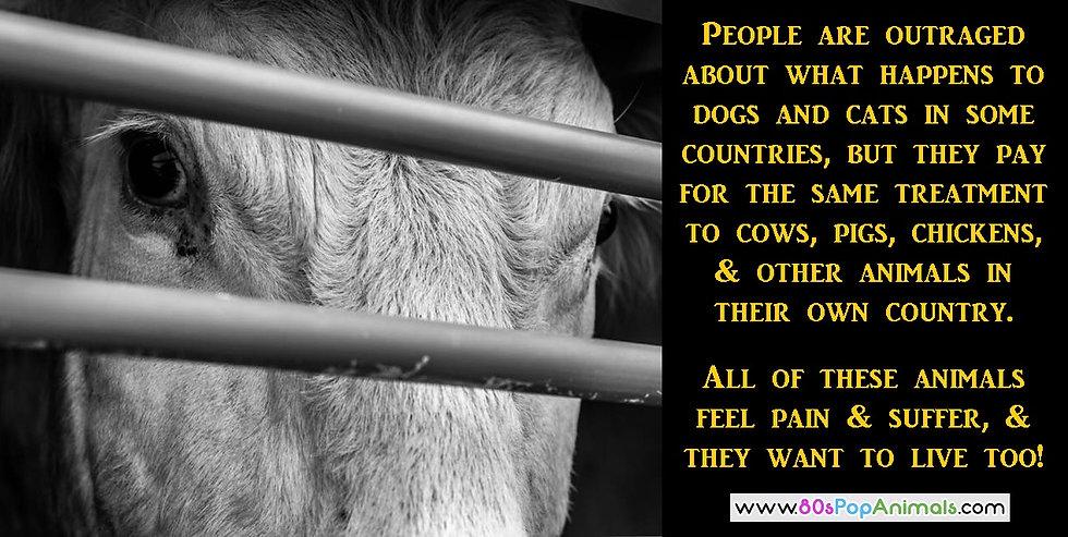 Farm Animals Suffer