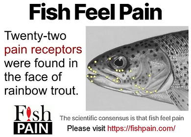 Fish Feel Pain