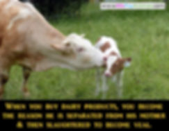 Dairy Cruelty Violence