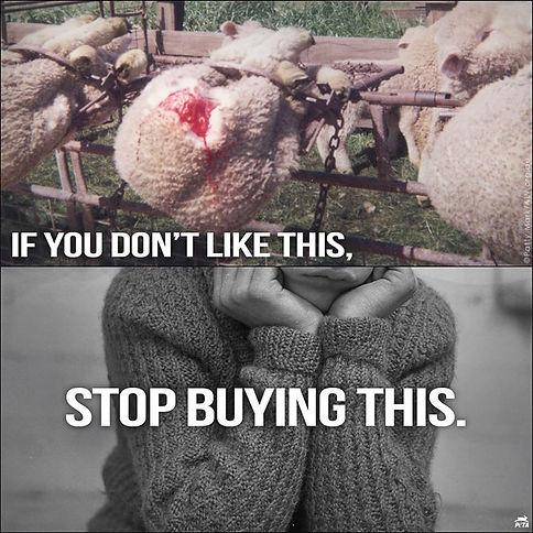 Wool Animal Cruelty