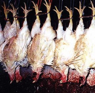 4 Chickens Hanging.JPG