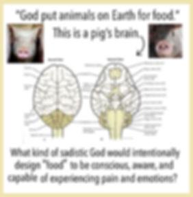 6 This Is a Pig's Brain.jpg