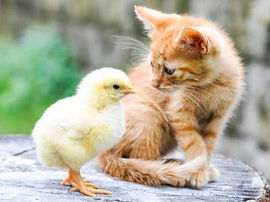 Chick with Cat.jpg