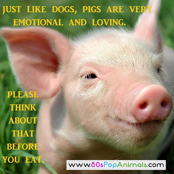 Pigs are emotional & loving